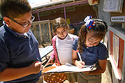 Manzo Elementary School 4th graders, Gilberto Fuentes, 10, (left), Lucia Garcia, 9, and Dominique Hernandez, 9, work in the school's organic garden, Tucson, Arizona, USA.  The school was the first in TUSD to be certified for garden to cafeteria food consumption and first in the state of Arizona for rainwater harvesting and composting. The  garden projects in the district work with internationally known Biosphere2 and the University of Arizona. The garden was built in conjunction with the National Park Foundation's First Bloom program. The project is supported in part by a USDA Farm-to-School grant.  Named Best Green School 2012 by the U.S. Green Building Council, Manzo is the only K-5 public school in the United States to receive that honor in response to their environmental initiatives.