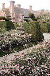 Looking towards the house at Great Dixter from the Peacock Garden, with low hedges of Aster lateriflorus 'Horizontalis' and Peacock topiary
