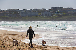 A woman walking her dogs on Fistral Beach in Newquay, Cornwall.