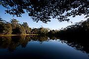 Linhares_ES, Brasil...Reserva Natural da Companhia Vale do Rio Doce (CVRD)...The Natural Reserve of Companhia vale do Rio Doce (CRVD)...Foto: LEO DRUMOND / NITRO