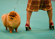 © Licensed to London News Pictures. 08/03/2013. Birmingham, UK. Dogs and owners on Day two of Crufts on 8th March 2013 at the National Exhibition Centre (NEC). Crufts, which is the largest annual dog show in the world, hosts over 20,000 dogs and owners who compete in a variety of categories.  Photo credit : Stephen Simpson/LNP
