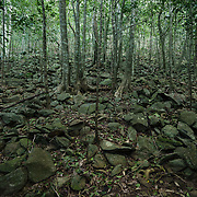 Stones that once formed terraces for the sugar crop on the steep hillside above Cinnamon Bay Plantation