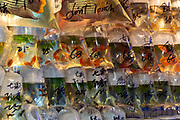Goldfish and other aquarium fish ready for sale in plastic bags at Goldfish Market, Tung Choi Street, Hong Kong, China.