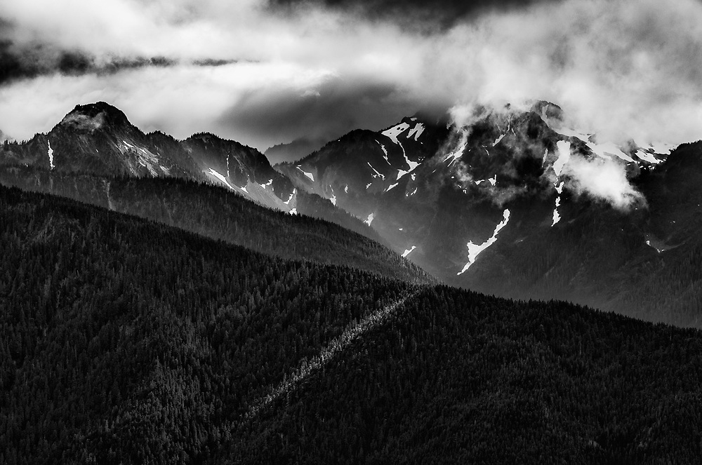 View from Hurricane Ridge, evergreen forest, Elwha River watershed, afternoon light, August, Olympic National Park, Washington, USA