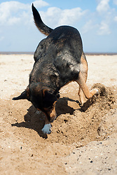 One day he will dig up buried treasure of hit oil<br /> <br /> 13 April  2013<br /> Image © Paul David Drabble