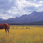 A brown horse grazes under cloudy skies in a meadow below the Sawtooth Mountains outside of Stanley Idaho