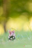Fairytale Nature Photography