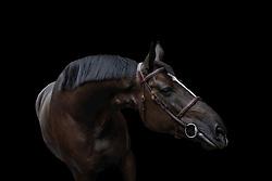 Black on black<br /> Black Horses Stables - Sliedrecht 2020<br /> © Hippo Foto - Dirk Caremans<br /> 27/06/2020
