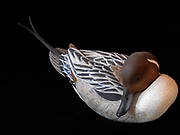 Decorative decoy of a drake pintail hand carved from basswood by Lee Suydam.
