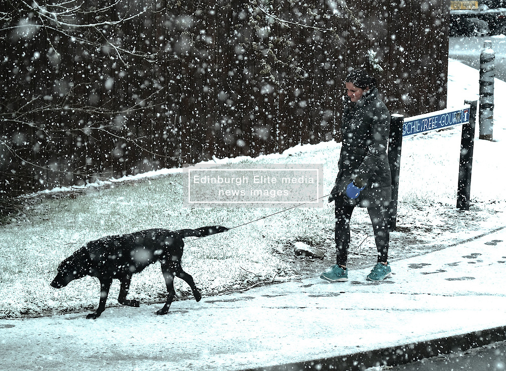 West Lothian Weather, Wednesday 3rd April 2019<br /> <br /> Pictured: A woman walks her dog in the snow which hit West Lothian on Wednesday morning<br /> <br /> Alex Todd | Edinburgh Elite media