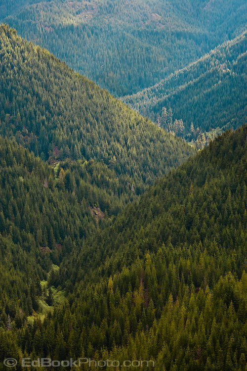 Cedar Creek canyon and the South Fork of the Skokomish River viewed from high on a ridge in the Church Creek drainage displaying the dense coniferous forest below - Olympic National Forest, Washington, USA