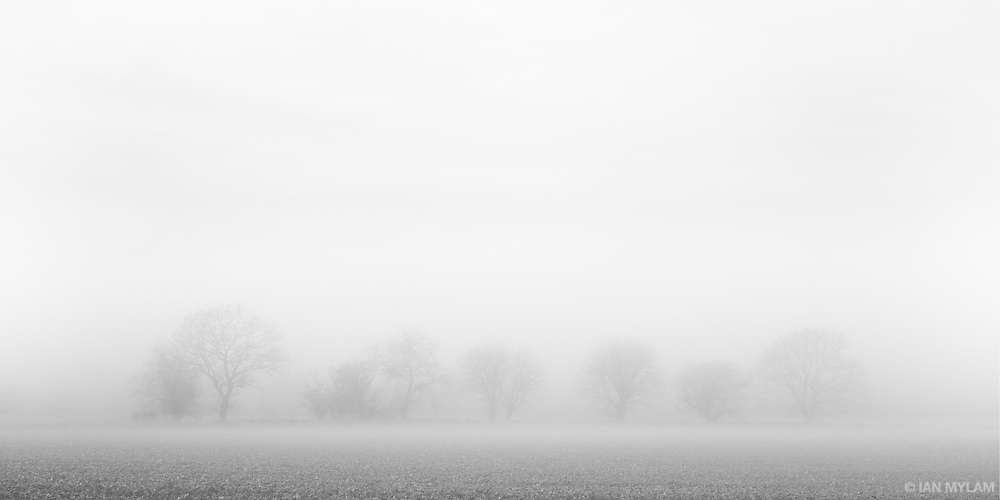 Trees in Mist - Isle of Funen, Denmark