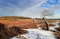 Snow at Bradgate Country Park, Leicester, England, UK.