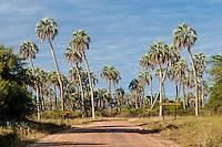 PARQUE NACIONAL EL PALMAR, CAMINO ENTRE PALMERAS YATAY (Syagrus yatay), PROV. DE ENTRE RIOS, ARGENTINA