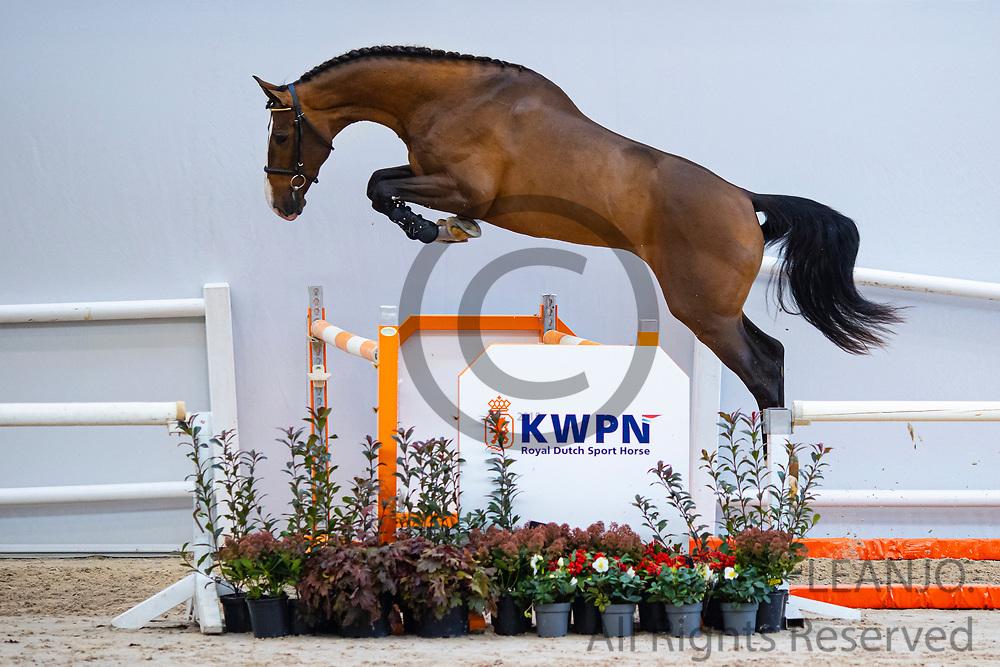 Niancard EB<br /> KWPN Select Sale 2020 <br /> © DigiShots