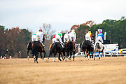 Colonial Cup - Camden, South Carolina. Racing action up the hill.
