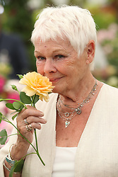 May 22, 2017 - London, United Kingdom - Dame JUDI DENCH  with a rose named after her at the Chelsea Flower Show in London.  (Credit Image: © Stephen Lock/i-Images via ZUMA Press)