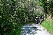 mountain bikes on a forest path in Stubaital, Tyrol, Austria