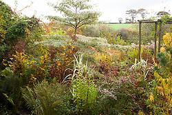 Border at Glebe Cottage in autumn with Cornus controversa 'Variegata', Fuchsia magellanica 'Versicolor', crab apple, fern and seedheads