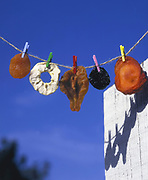 Conceptual image of dried fruit (Apricot, Apple, Pear, Prune and Peach) drying on a clothes line with pegs