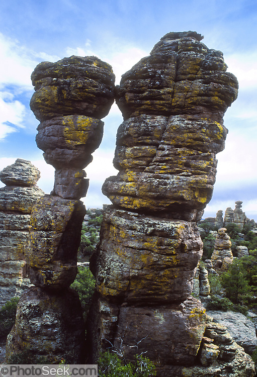 Hoodoos kiss at Chiricahua National Monument, Arizona, USA. The Heart of the Rocks Loop Trail (7 to 9 miles) makes an excellent day hike through fascinating arrays of hoodoos. 27 million years ago, huge volcanic eruptions laid down 2000 feet of ash and pumice which fused into rhyolitic tuff. This rock has eroded into fascinating hoodoos, spires, and balanced rocks which lie above the surrounding desert grasslands at elevations between 5100 and 7800 feet. At Chiricahua, the Sonoran desert meets the Chihuahuan desert, and the Rocky Mountains meet Mexico's Sierra Madre, making one of the most biologically diverse areas in the northern hemisphere. While we drove the dirt road to nearby Portal, Arizona, Carol saw a mountain lion crossing the road! Other animals here include javelina, coatimundi, bears, skunks, and deer.