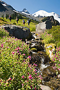 Hikers enjoy Lewis' monkeyflower blooming along a sparkling creek on the Wonderland Trail to Summerland in Mount Rainier National Park, Washington, USA. Published in 2011 by National Geographic Digital Media on the NG Adventure site adventure.nationalgeographic.com