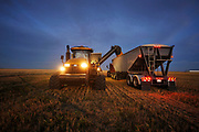 Grain trucks are loaded with wheat that is harvested on the Stephen and Brian Vandervalk farm near Fort MacLeod, Alberta, September 26, 2011.  REUTERS/Todd Korol (CANADA)