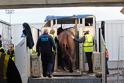Le Beau of Philippe Jorissen with groom Ingrid Dujardin<br /> Departure of the horses from Liege Airport to Lexington<br /> Alltech FEI World Equestrian Games - Kentucky 2010<br /> © Dirk Caremans