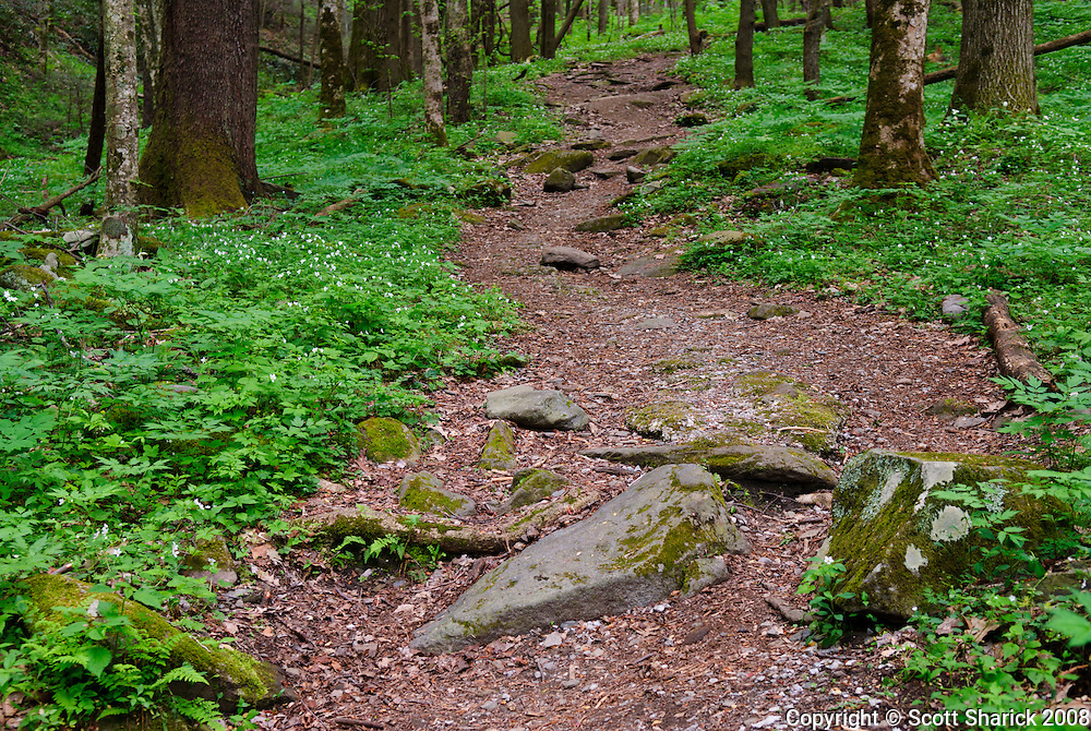A walk through the woods on a quiet dirt path in Smoky Mountain National Park.