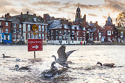 © Licensed to London News Pictures. 31/10/2020. York UK. Geese splash in the water on a flooded footpath in York after the River Ouse broke its banks in the early hours of this morning following heavy rainfall. Photo credit: Andrew McCaren/LNP