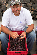 Portrait of a man destemming grapes by hand on Pantelleria Island, Italy.