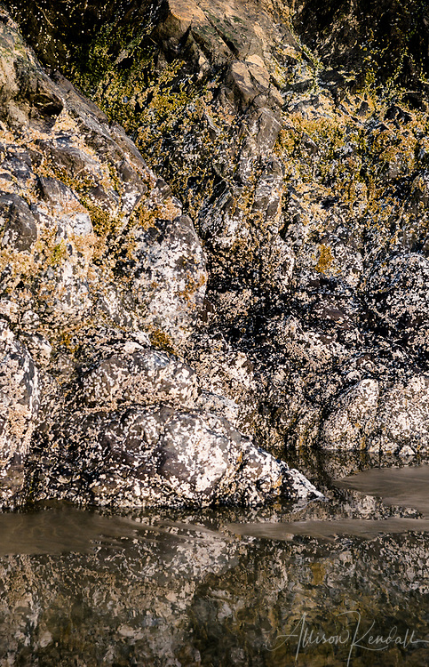 Details of Long Beach on the Pacific coast of Tofino, British Columbia, Canada