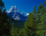 Howse Peak framed by lodgepole pines, Banff National Park, Alberta, Canada.