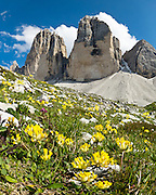 """Yellow flowers bloom beneath Tre Cime di Lavaredo (Italian for """"Three Peaks of Lavaredo,"""" also called Drei Zinnen or """"Three Merlons"""" in German), which are distinctive icons of the Alps, in the Sexten Dolomites of northeastern Italy, Europe. Until 1919 the peaks formed part of the border between Italy and Austria. Now they lie on the border between the Italian provinces of South Tyrol and Belluno and still are a part of the linguistic boundary between German-speaking and Italian-speaking majorities. Cima Grande rises to 2999 meters (9839 feet), between Cima Piccola  2857 m (9373 ft) and Cima Ovest  or """"Western Peak"""" 2973 m (9754 ft). The Dolomites were declared a natural World Heritage Site (2009) by UNESCO. Panorama stitched from 4 overlapping photos."""