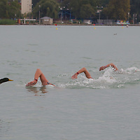 Members of team Great Britain compete in the Junior Team 3 km competition of the FINA World Junior Open Water Swimming Championships in Balatonfured (about 132 km South-West from capital city Budapest), Hungary on September 07, 2014. ATTILA VOLGYI