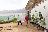 Farm workers moving equipment between greenhouses at The Sahara Forest Project on the outskirts of Aqaba, on Jordan's southern Red Sea coastline. The farm uses desalinated sea water and greenhouses to sustainably farm crops in land that was once aris desert.