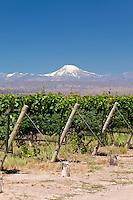 VINEDOS EN BODEGA SEPTIMA Y CORDILLERA DE LOS ANDES, VOLCAN TUPUNGATO (6.570 m.s.n.m), LUJAN DE CUYO, PROVINCIA DE MENDOZA, ARGENTINA (PHOTO © MARCO GUOLI - ALL RIGHTS RESERVED)