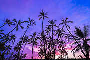 Palm trees at sunset, Pu'uhonua O Honaunau National Historic Park (City of Refuge), Kona Coast, Hawaii USA