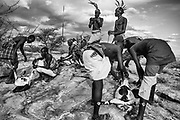 Samburu warriors slaughtering a goat, black and white,,Samburu, Kenya, Africa