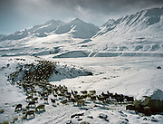 Sheep herd taken out in the morning..Campment of Tshar Tash (Haji Osman's camp), in the Wakhjir valley, at the source of the Oxus..Winter expedition through the Wakhan Corridor and into the Afghan Pamir mountains, to document the life of the Afghan Kyrgyz tribe. January/February 2008. Afghanistan