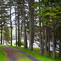 North America, Canada, Nova Scotia, Guysborough. Walking trail of Boylston Provinicial Park trail.