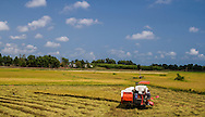 A farmer on his harvester work over a rice field. Dat Do area, Vietnam, Southeast Asia