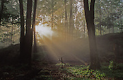 Northeast PA Landscape, World's End State Park Sunburst in Forest