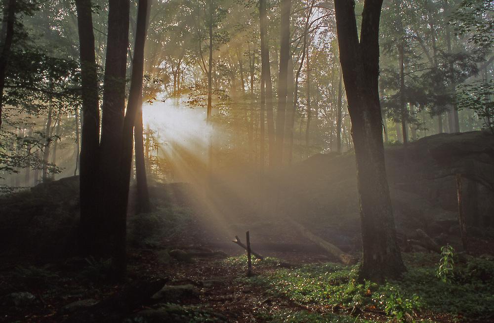 Northeast PA Landscape, World's End State Park Sunburst in Forest
