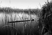 Fine Art: On the way to an Everglades boardwalk  is an old relic dugout Indian canoe behind the sawgrass. Infrared Black & White<br /> <br /> I've been many parts of the Florida Everglades but only once to this place where it's inside the park with a long board walk.