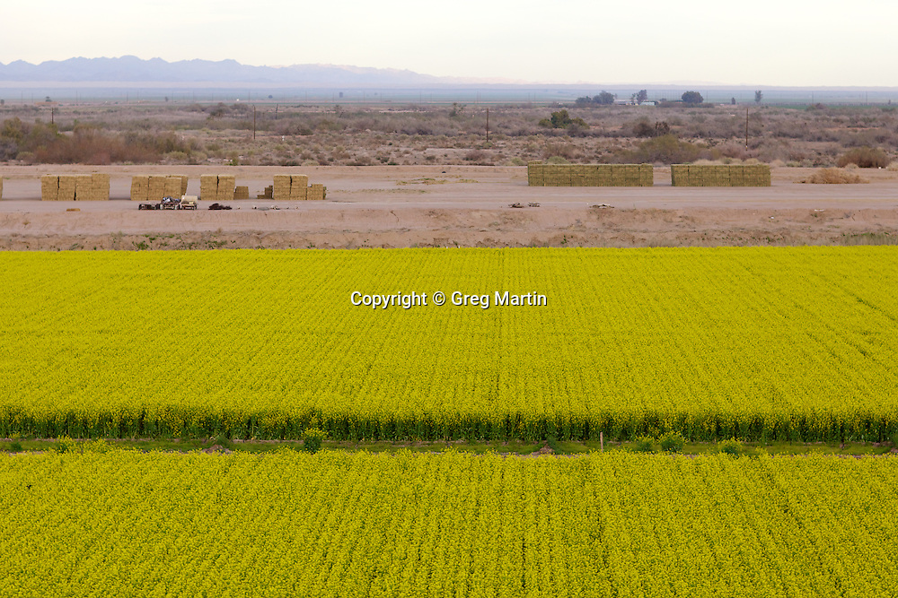 Aerial photograph alfalfa fields and stacked bails, Brawley, California, Imperial Valley