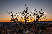 Sunset silhouettes a dead tree near Devils Garden Campground, Arches National Park, Moab, Utah, USA.
