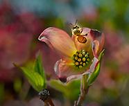 Bridgeport , CA, Buttermilk Spring
