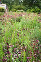 Tom Stuart-Smith's prairie meadow. Planting includes Dianthus carthusianorum and Penstemon barbatus 'Coccineus'