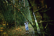 Tela: Lancetilla Botanical Garden, founded by United Fruit Company (1926). A long tunnel formed by an arch of bamboo.